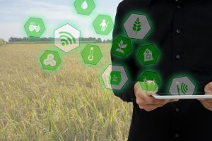 Internet of things(agriculture concept),smart farming,industrial agriculture.Farmer hold the tablet and to use augmented reality technology to control ,monitor and mangement in the field