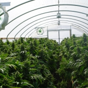Cannabis Cultivation - Complete Controller