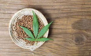 Cannabis seeds in a bowl on rustic wooden background